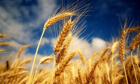 41-wheat-beautiful
