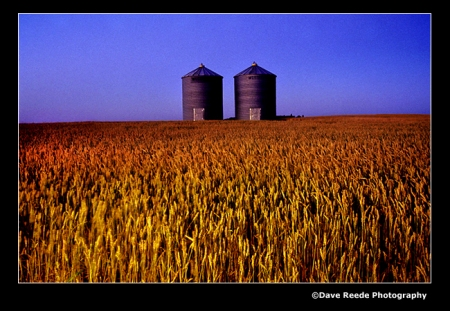 """Grain bins in a spring wheat field"" photograph by Dave Reede"
