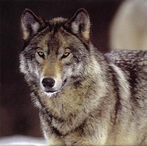 benjwolf1