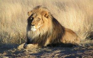 judah_lion