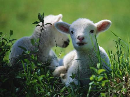 verse 39:  Offer one lamb in the morning and the other at twilight.