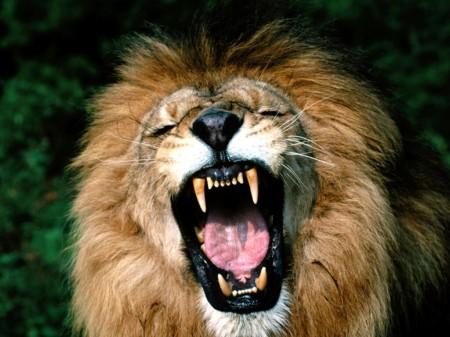 5. roaring-lion
