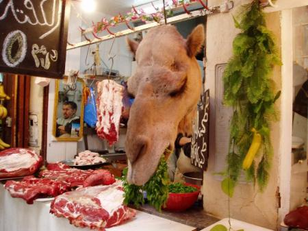 You may not eat camel. (Don't laugh -- I ate a camel burger in Syria. Very stringy meat, as I remember!)