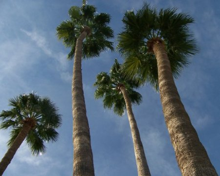 33. palm trees