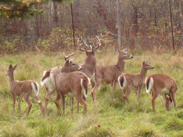 """deer of providencia essay example View essay - """"the deer at providencia"""" from teaching a stone to talk from educ 3301 at university of houston on the rope, and gashed"""" she does nothing then she goes on to indirectly."""