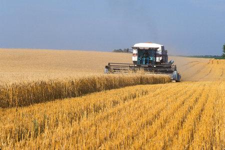 http://dwellingintheword.files.wordpress.com/2010/09/12-wheat-harvest-nd.jpg