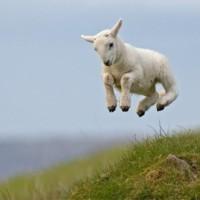 Gentle Shepherd, Spotless Lamb