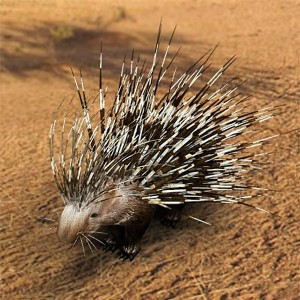 I34 Porcupine-