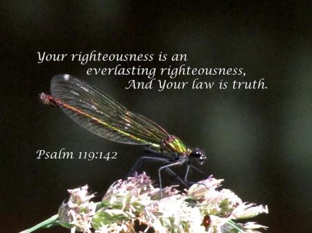 P119 truth
