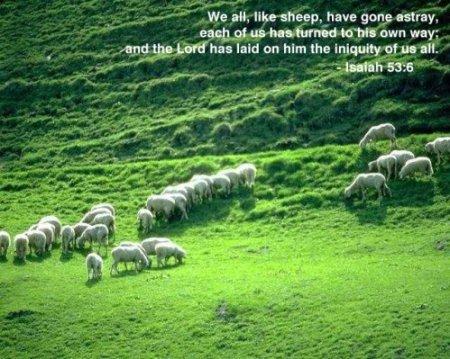 I53 like sheep