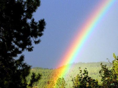 I61 rainbow