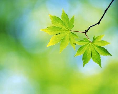 TTR two-spring-leaves