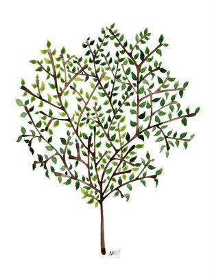 Jer11 olive tree
