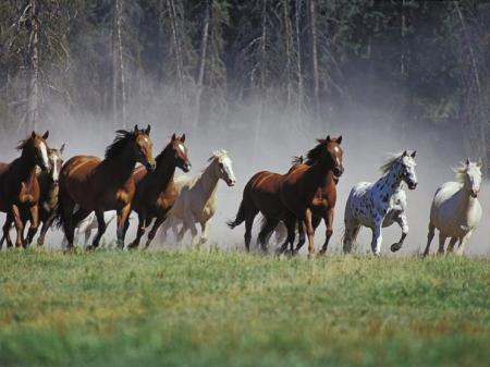 """If you have raced with men on foot and they have worn you out, how can you compete with horses?"