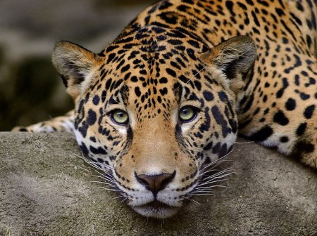Jer13 leopard