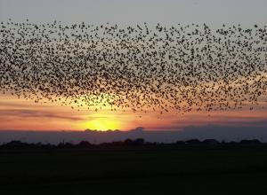 Jer8 migrating swallows