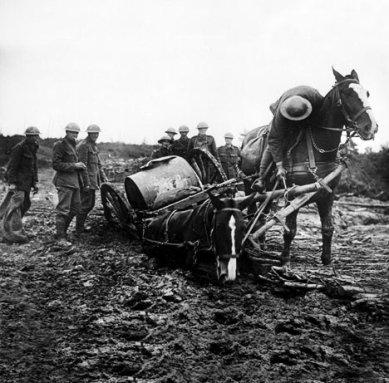J46 horses at war