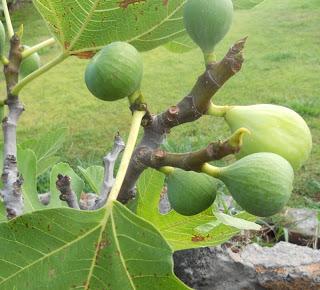 Mk11 figs