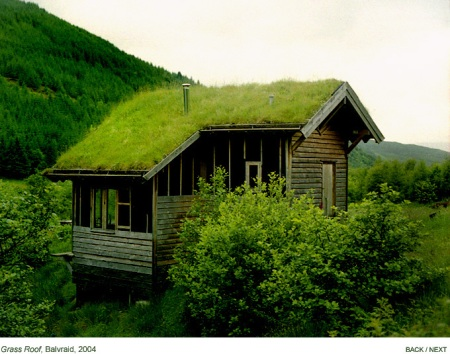 grass roof in Scotland