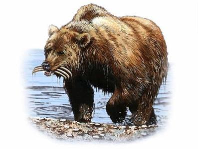 Dan7 bear