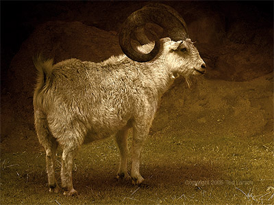 Vision of the Ram. digital art by Ted Larson.