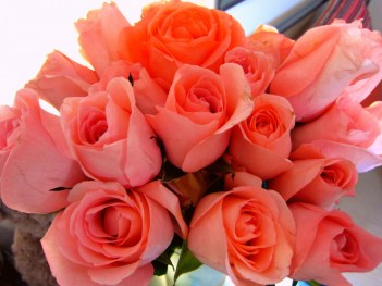 2Cor2 roses