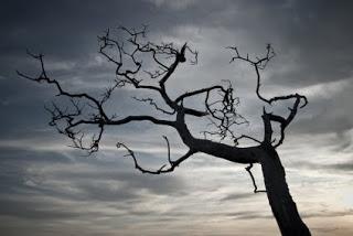 James3 dead tree