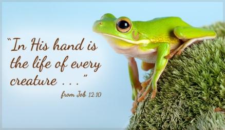 Job12 frog