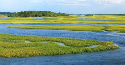 Job8 lowcountry marsh