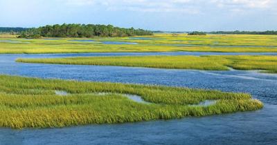 Job8 lowcountry marsh