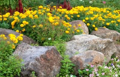 Job8 rock_garden_yellow_flowers