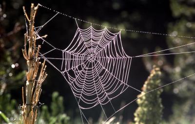 Orb spider web; J Schmidt; 1977