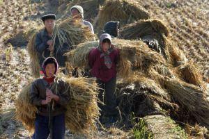 Job24 workers N Korea