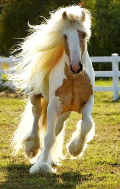 Job39 horse mane