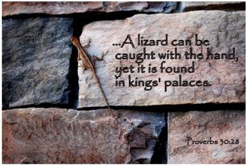 Pro30 lizard