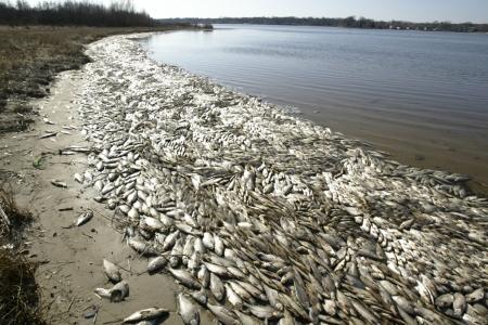 KWS Mona Lake dead fish 6.JPG