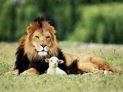Rev5 lion and lamb