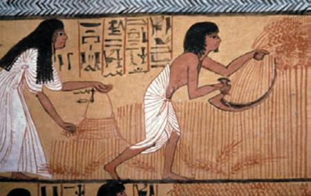 Harvest in Egypt, from the tomb of Sennedjem, Thebes, ca. 1200 BC.