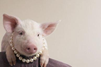 M7 Pig in Pearls
