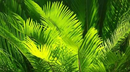 Num24 palm