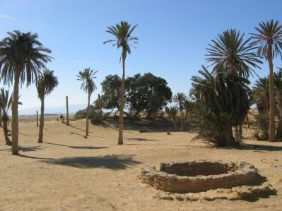an oasis at Elim, complete with palm trees