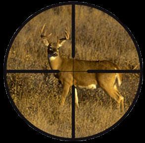 Prov6 deer