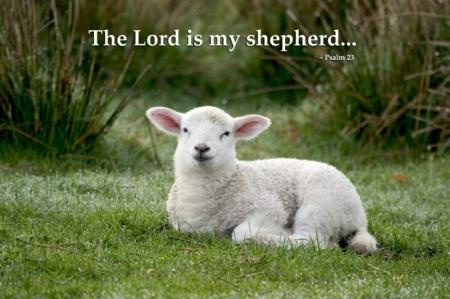 Ps23 lamb