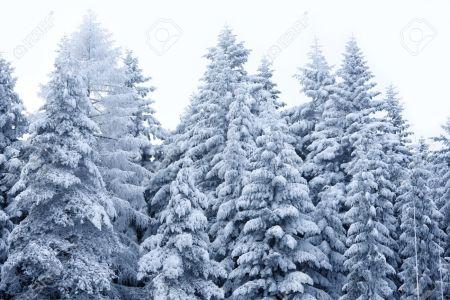 Ps51 snow